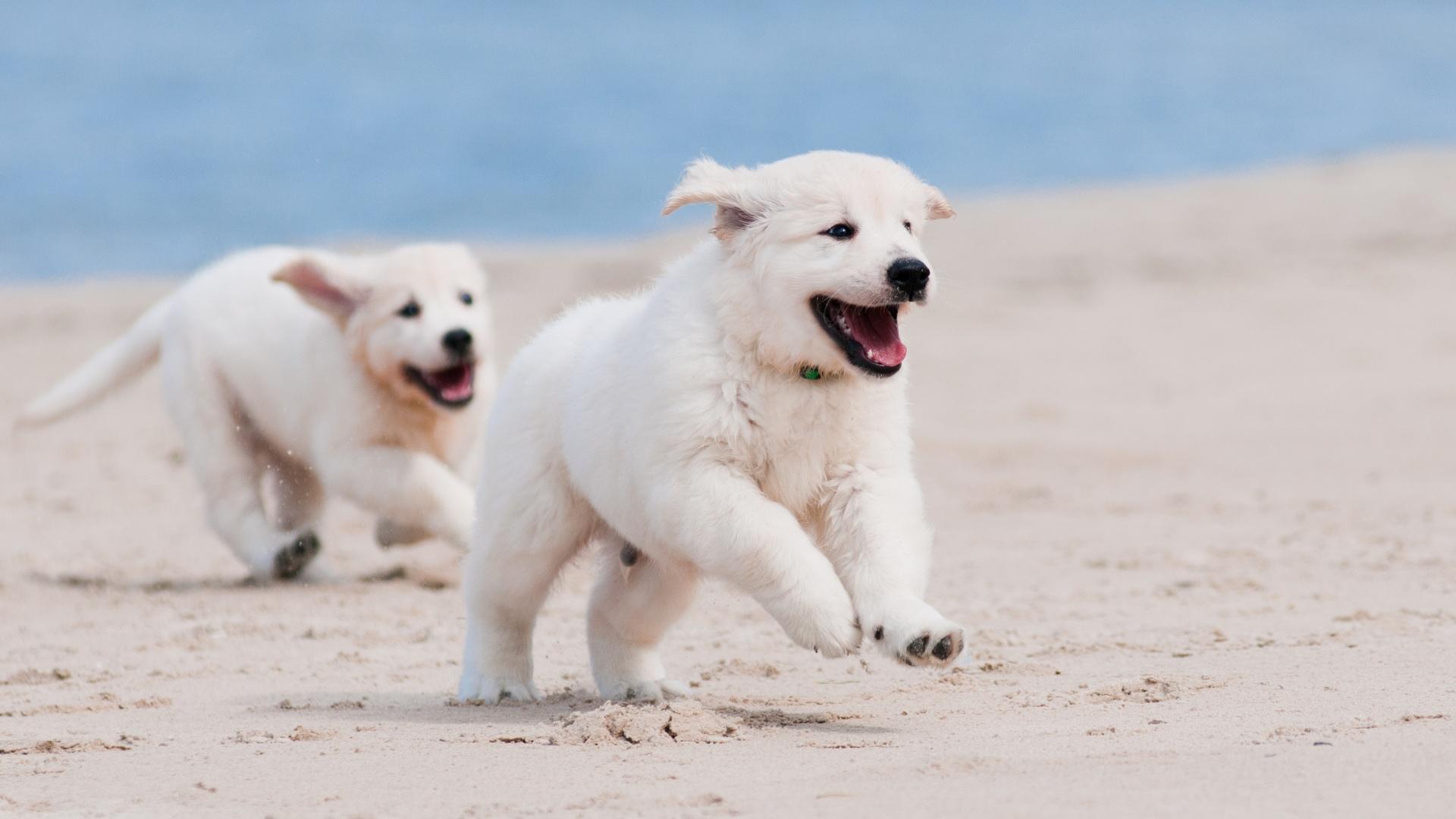 世上有两种狗!狗狗乖乖喝水同伴却狂飞奔